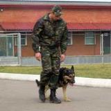 Дрессировка и подготовка собак к несению службы