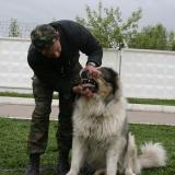 Тестирование собак